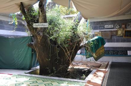 Sayyiduna Imam al-Nawawi's Maqam Destroyed in Nawah